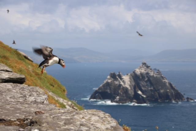 Kenza Puffin Ireland